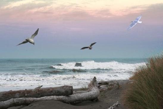 ocean shore 1
