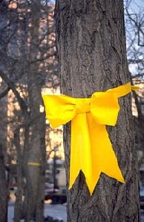 yellowriboak