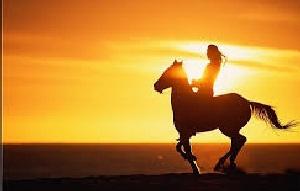 horse 100